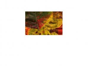 Quark Page Sample
